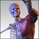 3D Virtual Human Anatomy Studio (PC) Discount