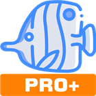 Copyfish PRO - Get text from images and PDF (Mac & PC) Discount
