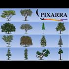 Tree StudioDiscount