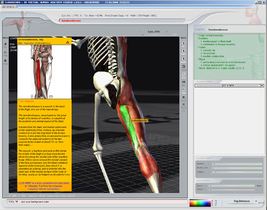 3D Virtual Human Anatomy Studio, Art Technique Software Screenshot