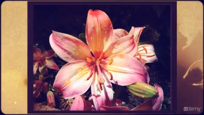 Hobby, Educational & Fun Software, iPhone Photography Secrets Screenshot
